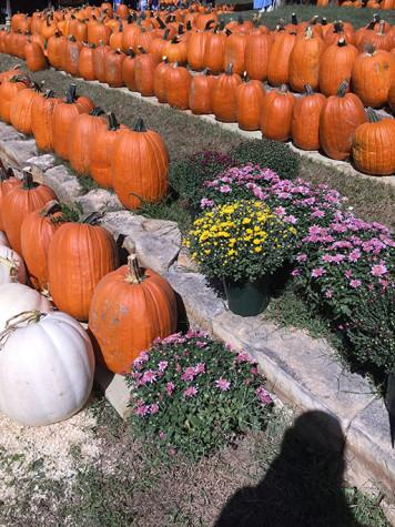Pumpkins on display at Weston Red Barn Farm in Weston, Mo. on Sept. 26