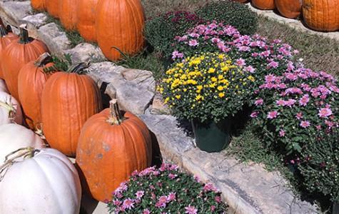 Unique pumpkin options a short drive away