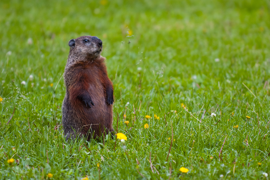5 things you did not know about Groundhog Day