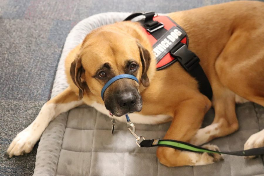 Winnetonka welcomes service dog